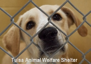 Tulsa Animal Welfare Shelter